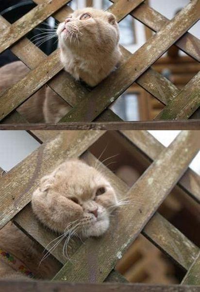 Stupid cat