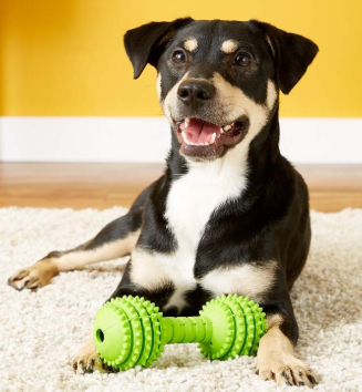 These 10 Indestructible Toys Is The Best Thing For Heavy Chewing Dogs Puppy Toys Teething Dog Toys Indestructable Plush Dog
