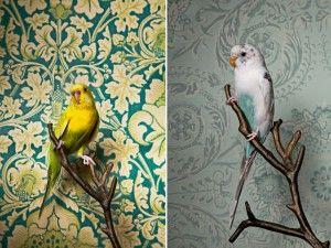 Birds Of A Feather PARA PACHECO (MUCHOS ADENTRO)