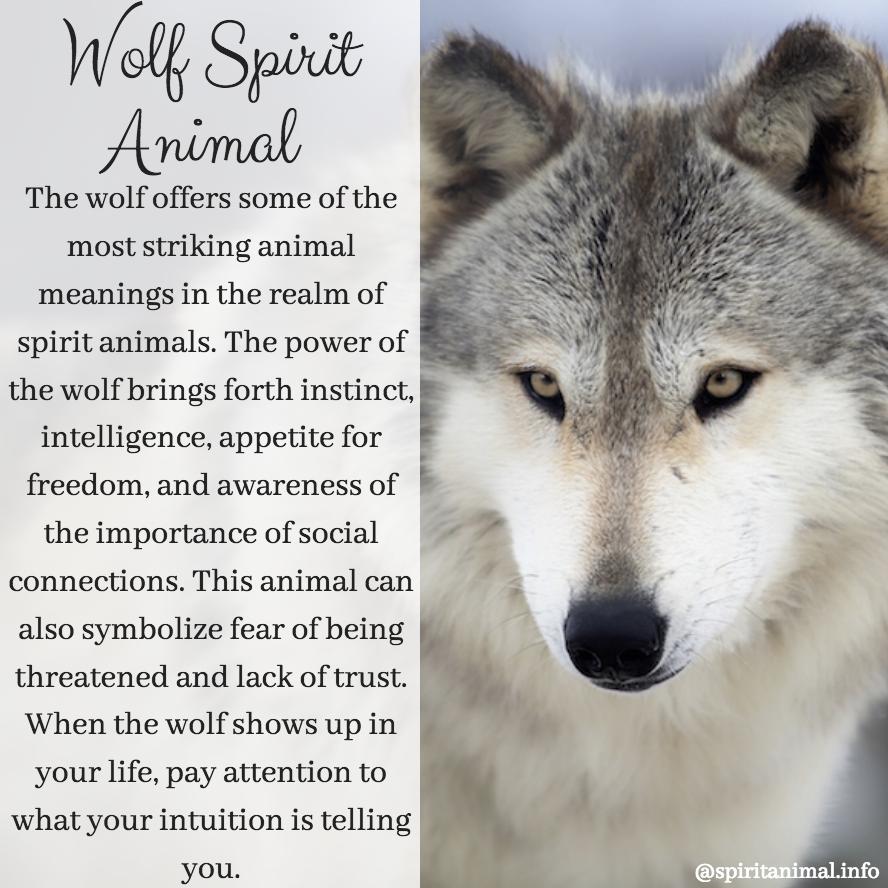 Wolf Spirit Animal   Wolf   Wolf spirit animal, Wolf spirit, Spirit
