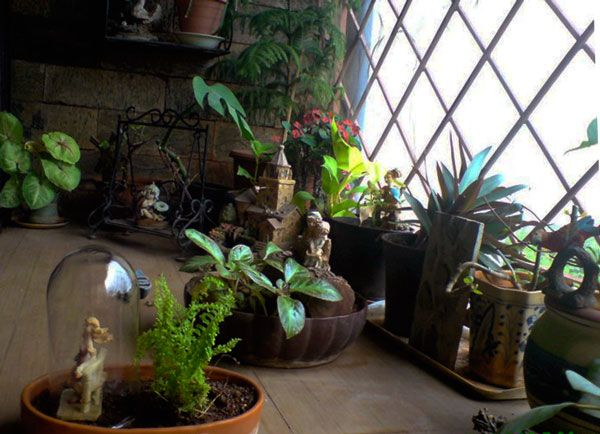 Praniti Vermas Small Garden Ideas for Indian Apartments