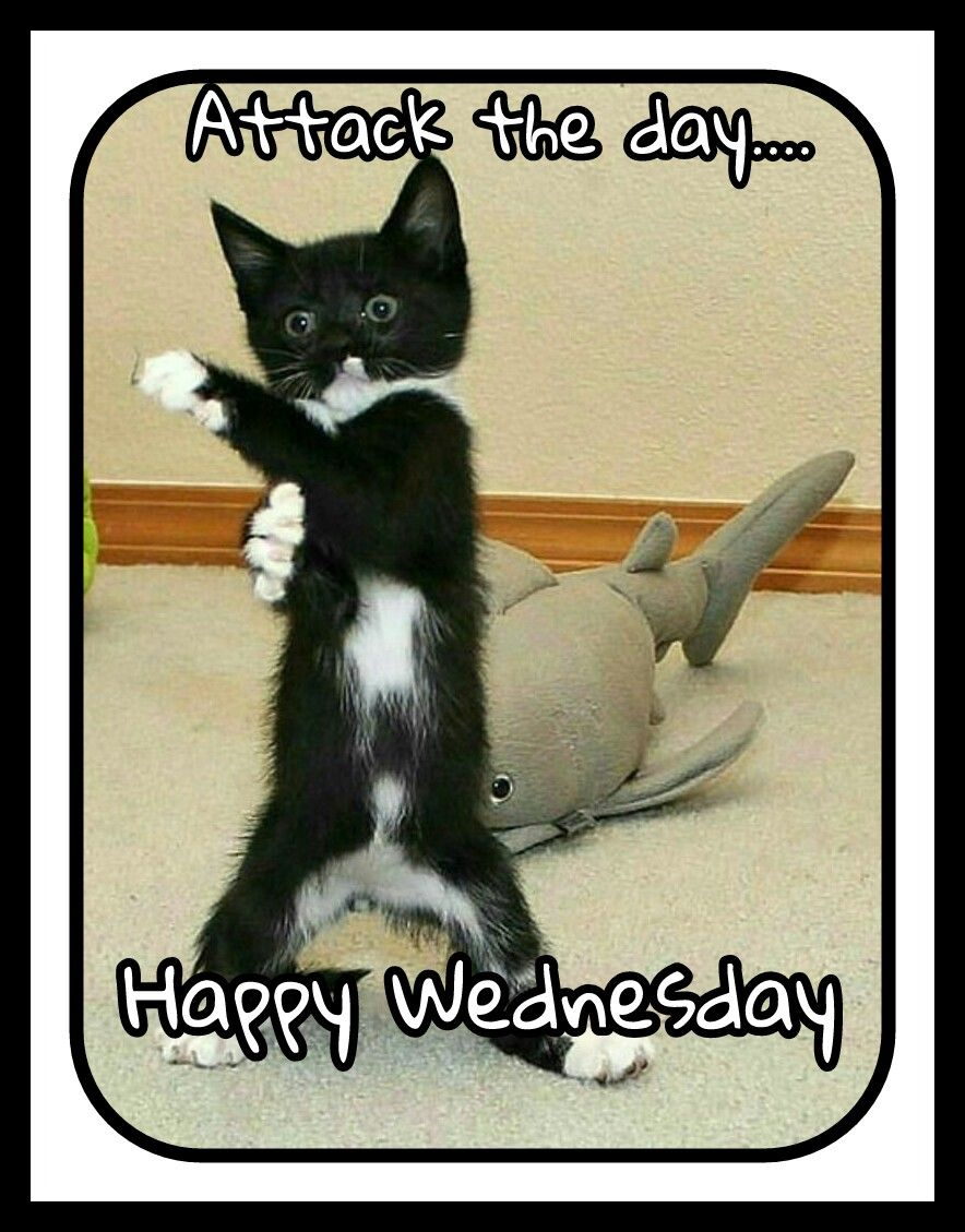 Happy Wednesday Happy wednesday quotes, Funny animals