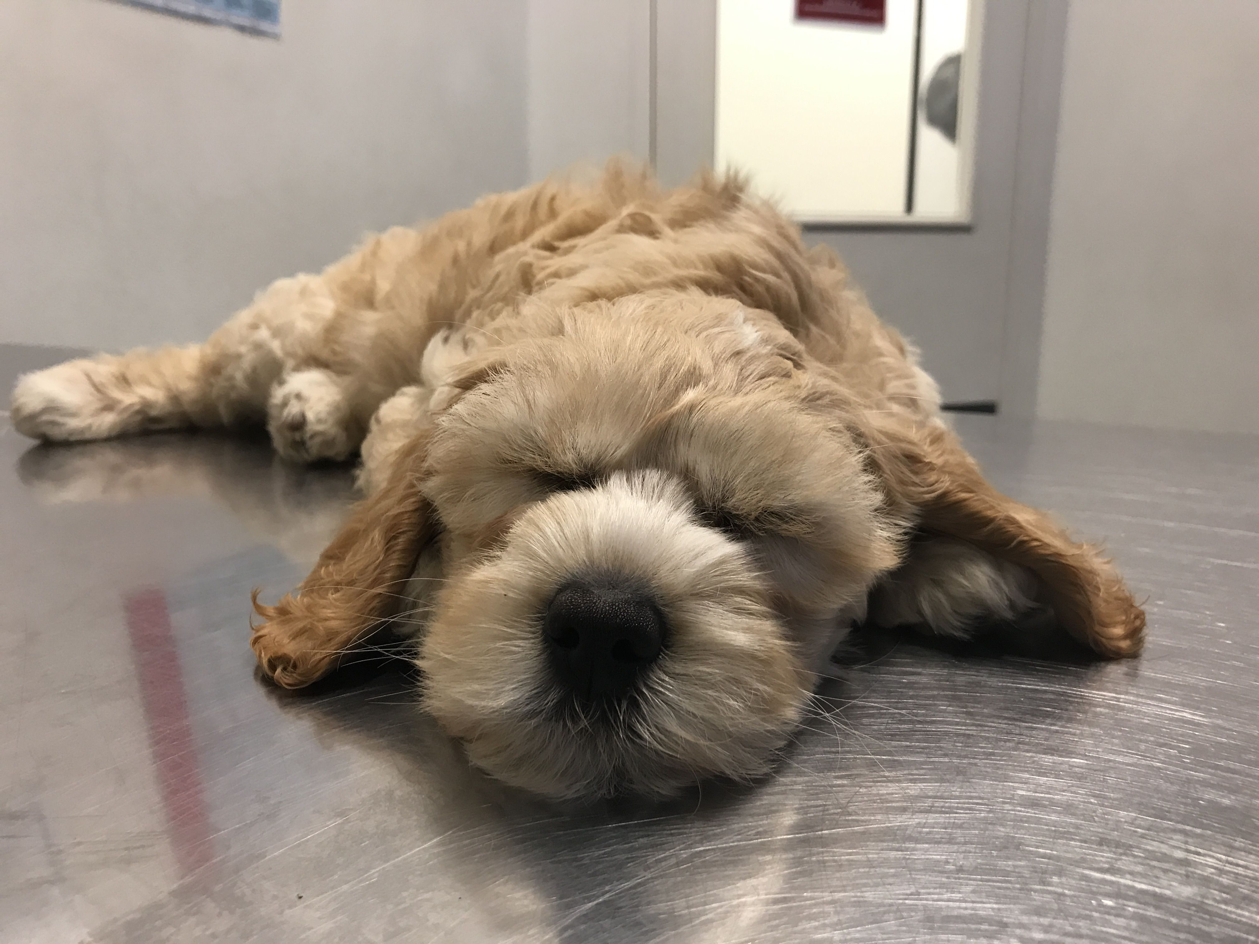 First visit to the vet and i slept right through sleepy