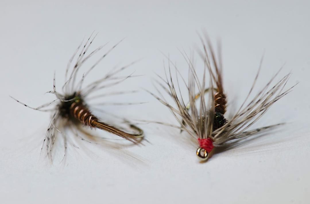 A couple of soft hackles off the vise, a great pattern for swinging on small streams.   A different perspective of the venerable soft hackle pheasant tail #nikon #flytying #pheasanttail -  -  -  -  -  -  #flyfishing #flytyingjunkie #flytyingaddict #flytyingporn #ontario #ontarioflyco #supportsmallbusiness #trout #troutcandy #troutflies #pheasanttail #troutbum #softhackle #wetfly #flyfishingjunkie