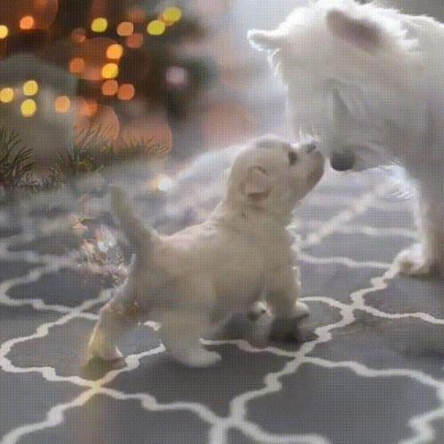 momma i love you cute pets cutepets pet babblepets