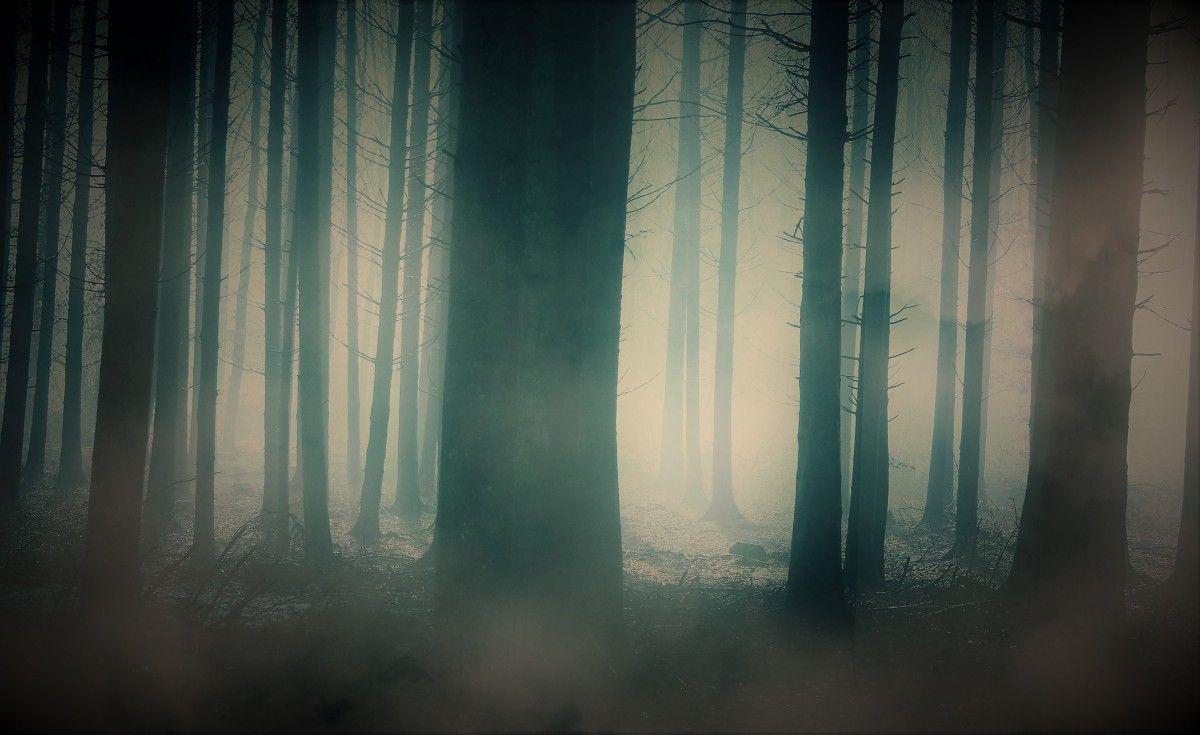 صورة عالية الدقة خالية من الغابة الخلفية الأزرق الطبيعة البيئة الطبيعية شجرة أتموس Photo Home Decor Decor