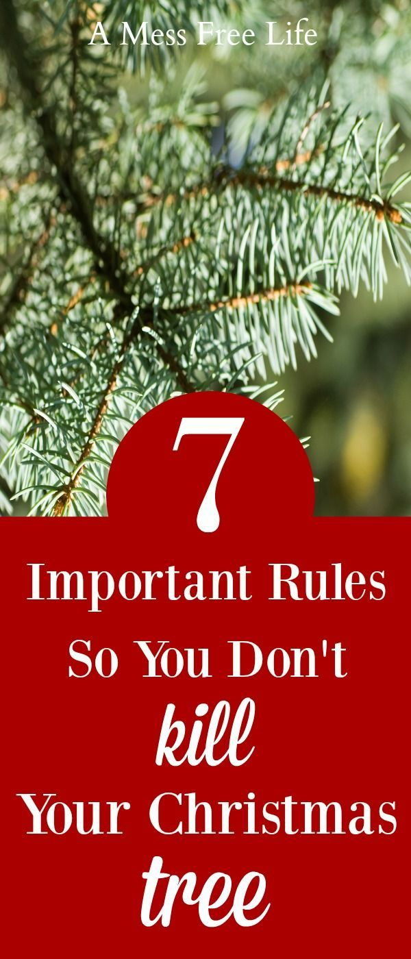 7 Rules To Keep A Christmas Tree Fresh All Season Long | Stay fresh ...