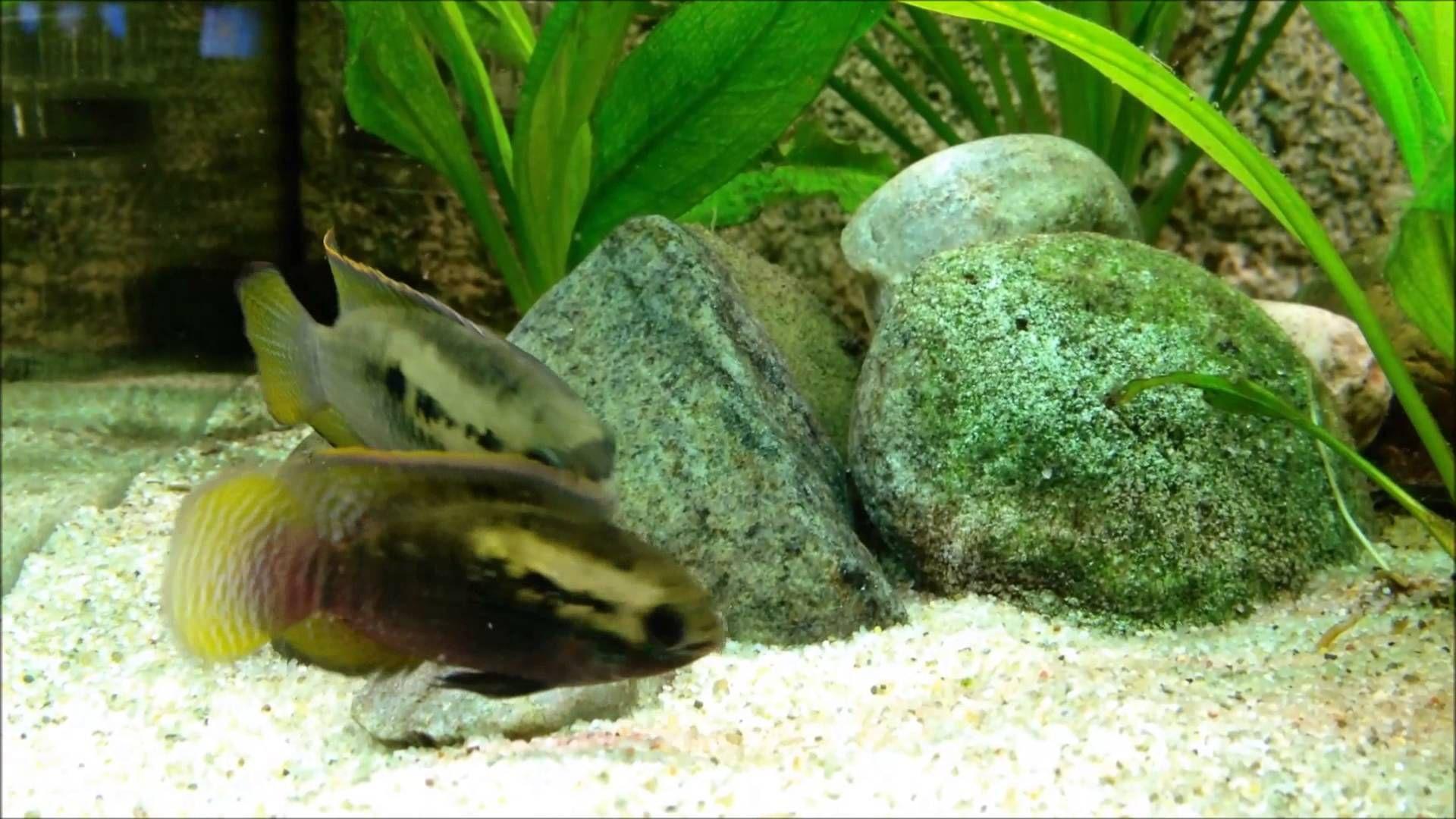 420de802f860e7ca2556e6e5203645f3 Luxe De Crevette Aquarium Des Idées