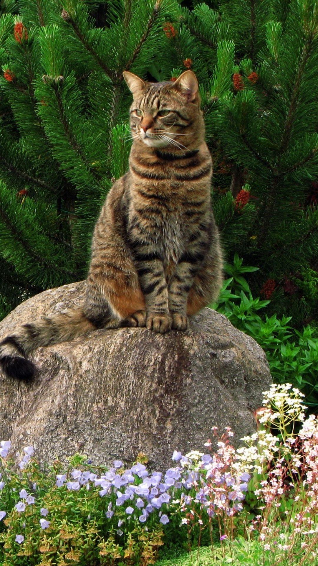 cat, grass, flowers, garden, rock, sitting, landscape