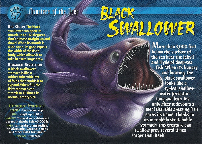 Black Swallower Deep sea creatures, Wild creatures