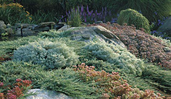 Mass Plantings With Images Conifers Garden Plants