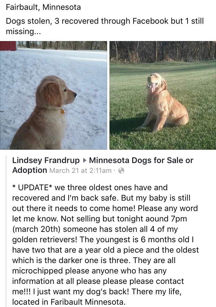 minnesotamissingdog MN Minnesota Dogs for sale