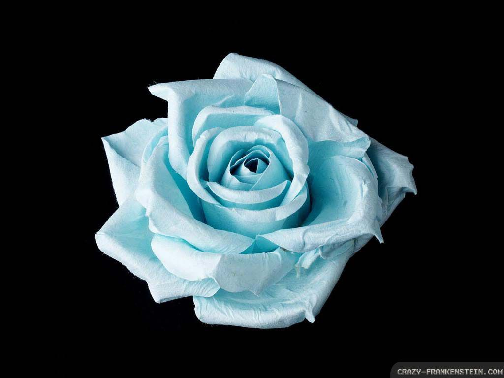 Flower tattoos collections blue rose tattoo meaning light blue flower tattoos collections blue rose tattoo meaning izmirmasajfo