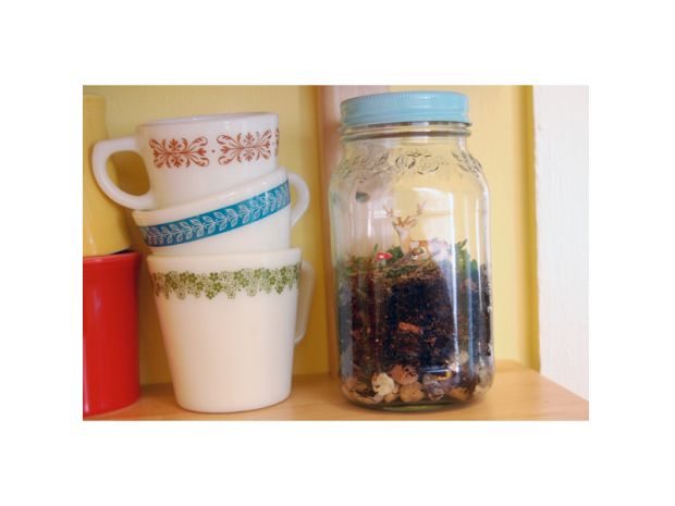 Mason jar terrarium. Think about using an old, large pickle jar. Paint the lid with chalk board paint!