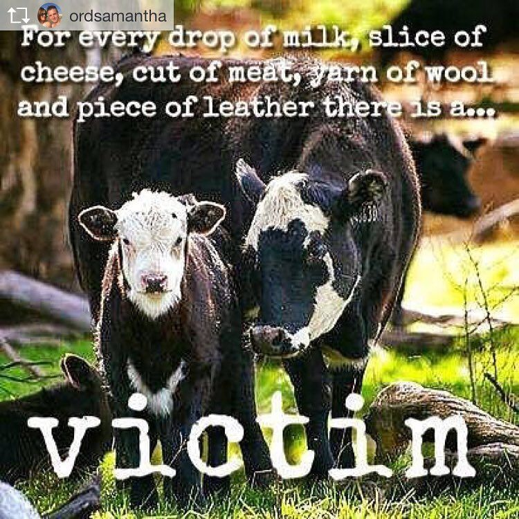 why vegan - for the victims - veganism for cruelty-free, ethical, eco-friendly, healthier and cleaner living #vegan