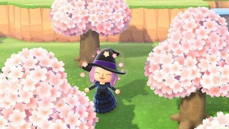 Animal Crossing Cherry Blossoms How To Find Cherry Blossom Furniture Recipes And Catch Cherry Blossom Pet Cherry Blossom Petals Animal Crossing Cherry Blossom