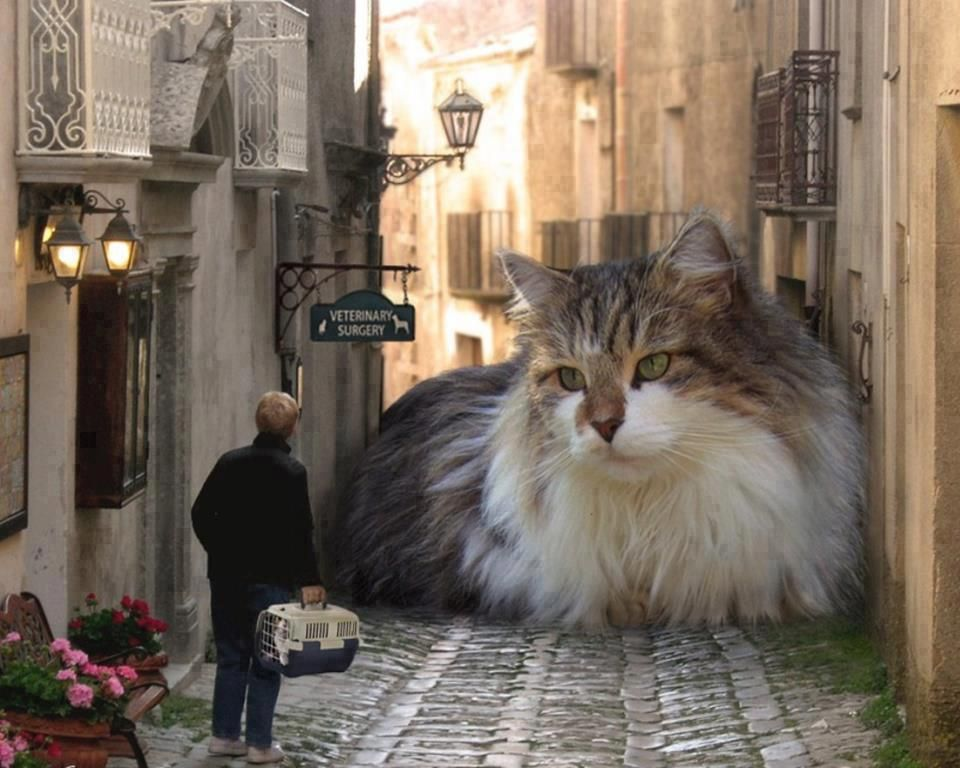 The biggest cat in the world | Funny | Pinterest | Cats, Funny ...