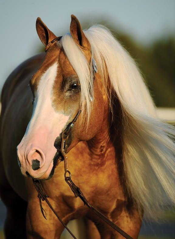 Twice as Shiney   Quarter Horse stallion; Smart Shiner x Tronas Pearl (Docs Tronalena)