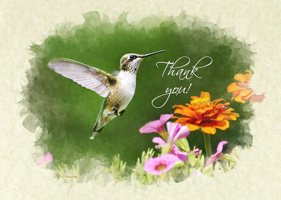 Hummingbird Flying With Flowers Thank You Card Photograph © Christina Rollo www.rollosphotos.com