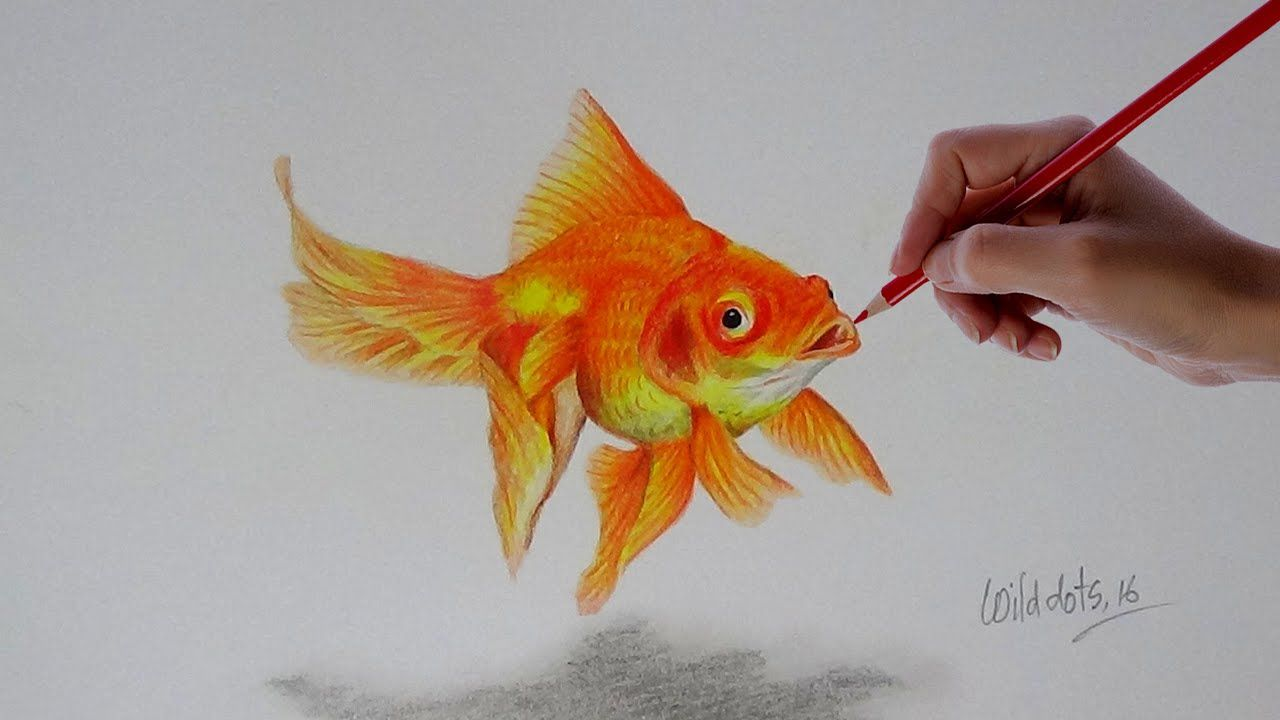 Gold Fish A Realistic Drawing With Simple Colored Pencils Realistic Drawings Fish Drawings Gold Fish Painting
