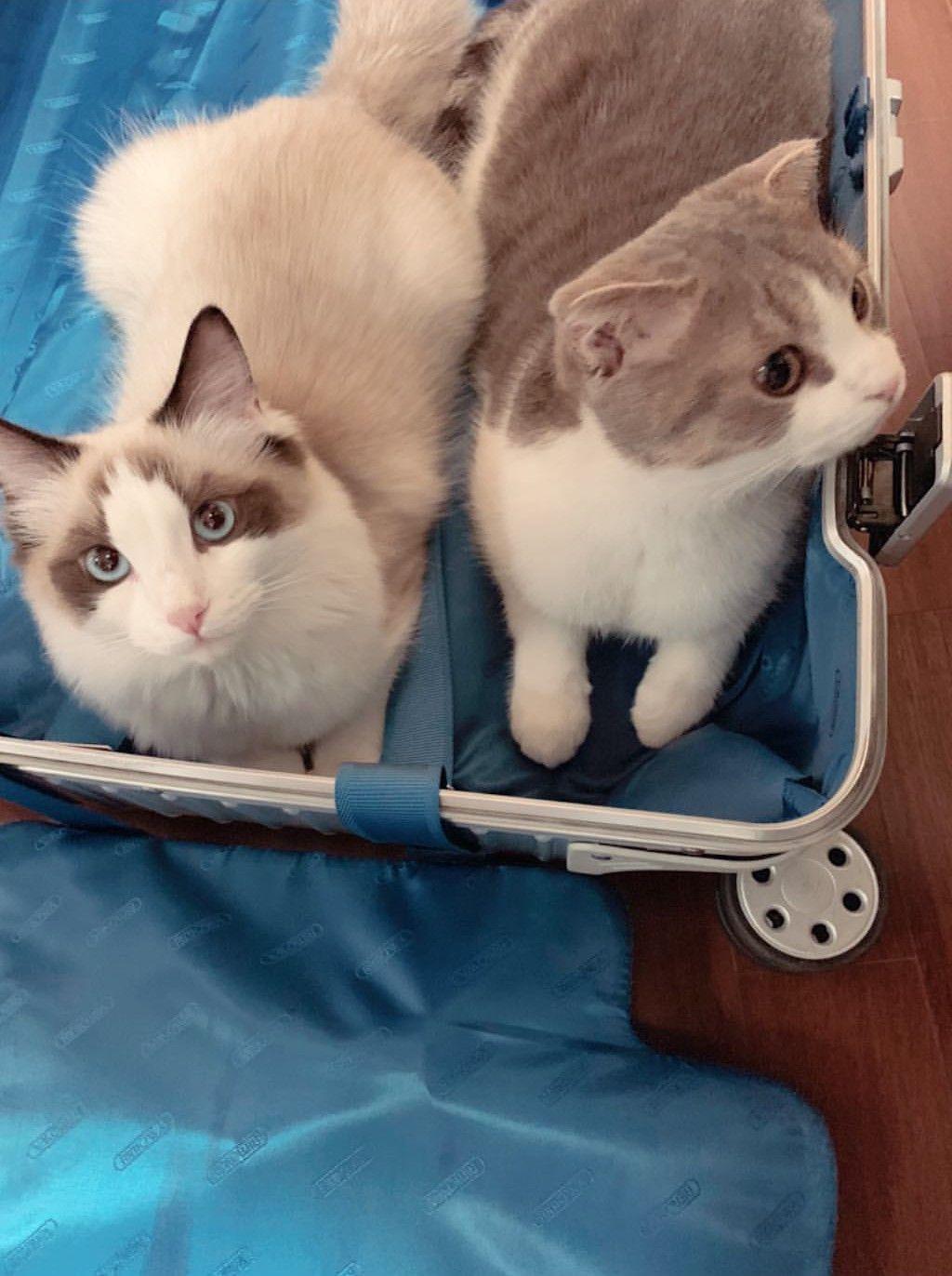 Don T Mess With My Gangsta Kitty Meaoww R Aww Kitty Aww Animals
