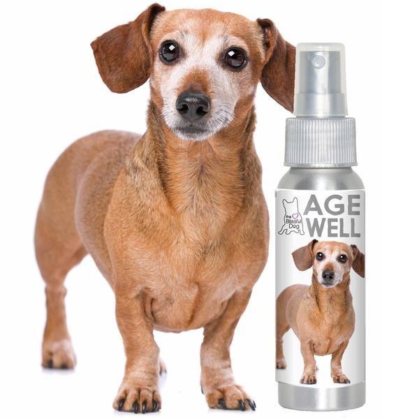 Dachshund Age Well Dog Aromatherapy Dachshund Dogs Dachshund Dog
