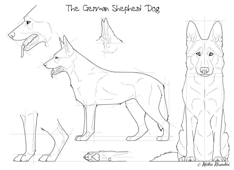 The German Shepherd Dog by *Maranez on deviantART | German shepherds ...