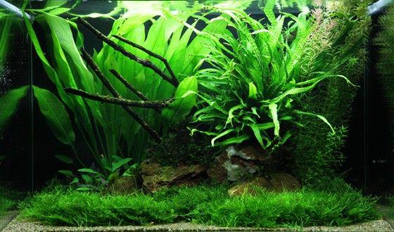 Layout 63 - Tropica - Tropica Aquarium Plants