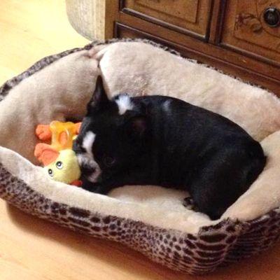 Contestant: Tini #BilJac #puppy