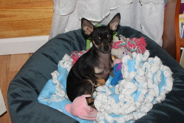 Luca for Dogs, Cuddler Dog Beds #pets #dogs #petsarepeopletoo #holidaygiftguide2015