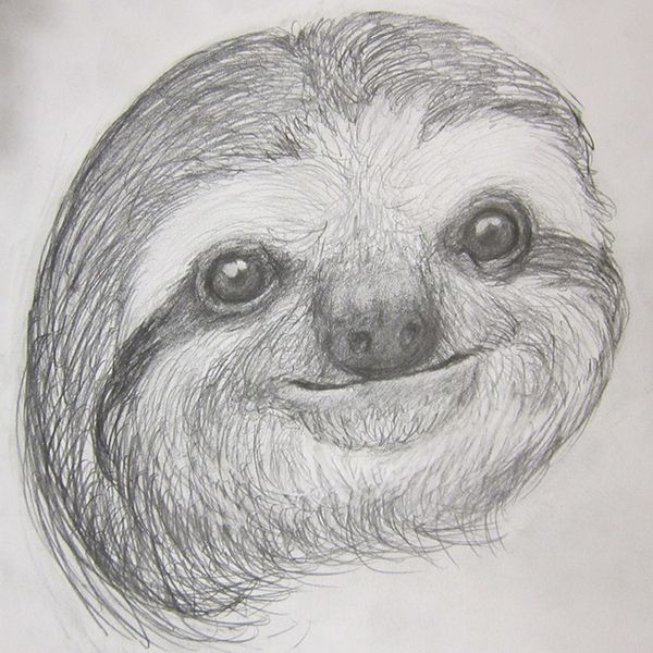 sloth sketch sloth sketch by suboshigrl things to draw