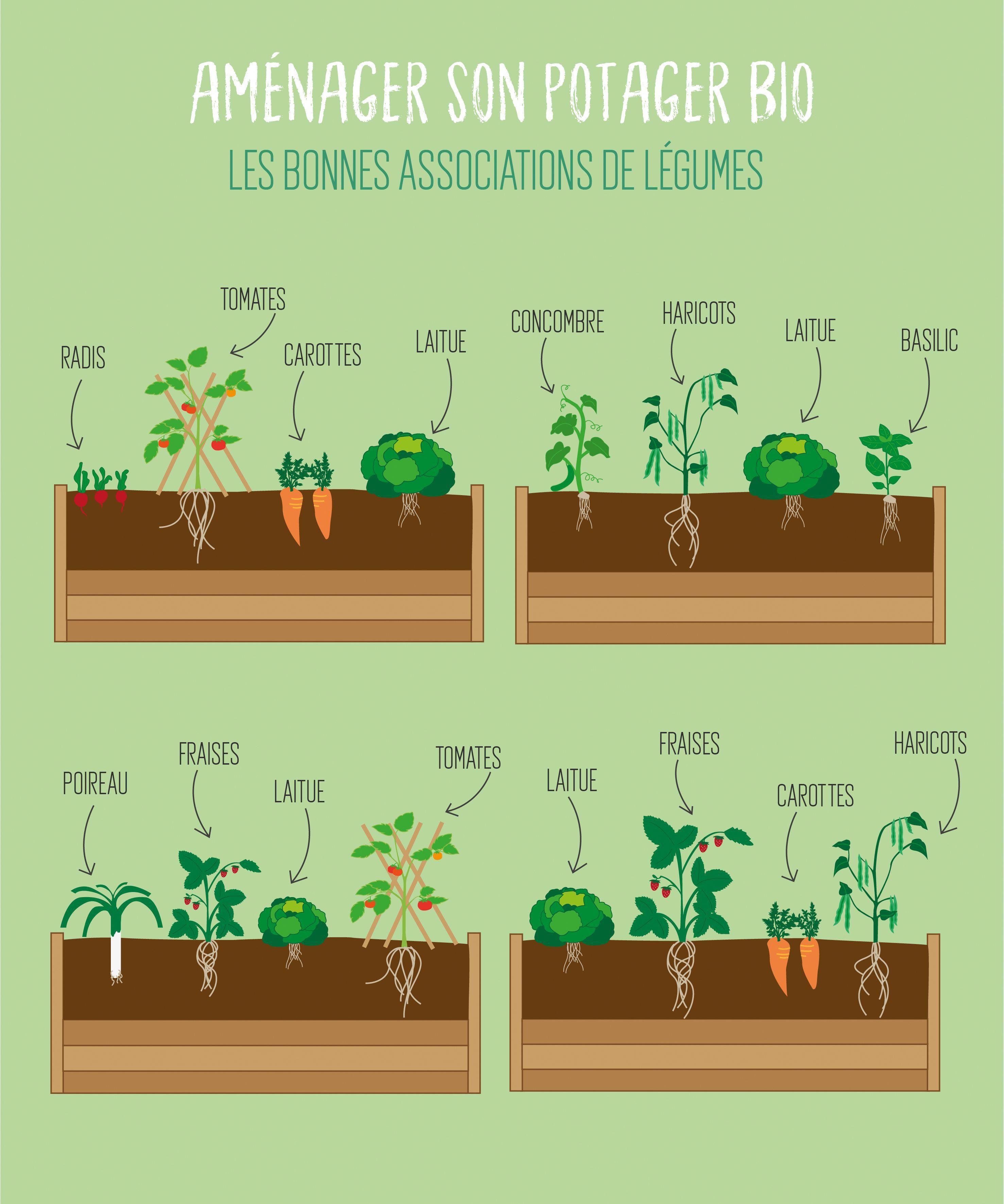 Le Secret Pour Un Potager Bio Efficace Le Cohabitation Decouvrez Les Bonnes Associations De Legumes Amis Et De Plantes C Potager Bio Potager Jardin Potager