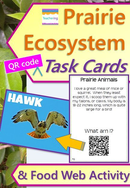 Prairie Ecosystem Task Cards with QR Codes & Food Web Activity