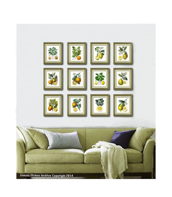 Wall Art Sets For Living Room antique botanical prints fruit living room wall art set of 12