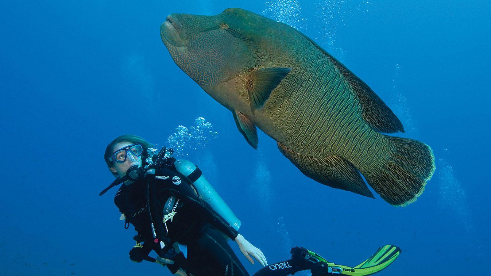 Diving in Maldives: www.daturu.com