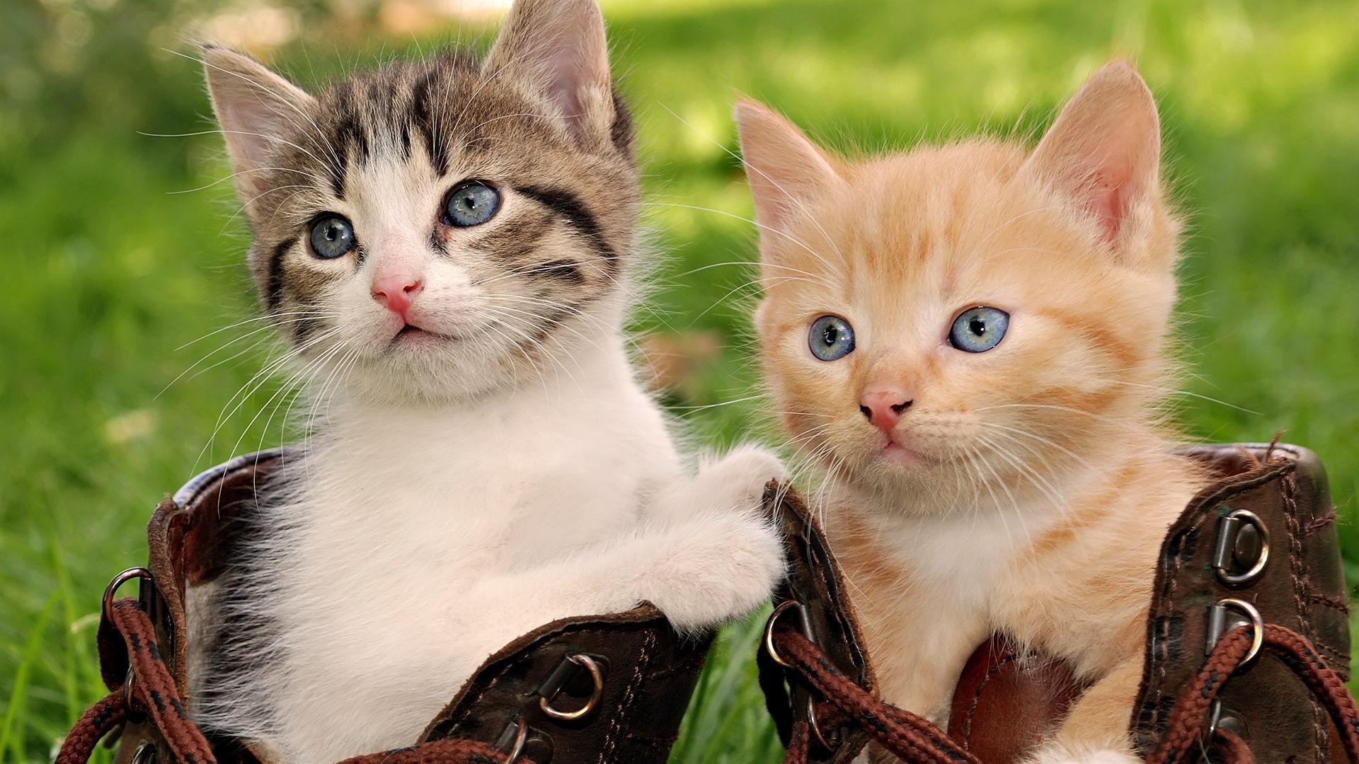 Cute Cats Wallpaper Hd Hd Wallpapers 1080p Download Full Hd Wallpaper Download In 2020 Baby Cats Cute Animals Puppies Cute Animal Videos