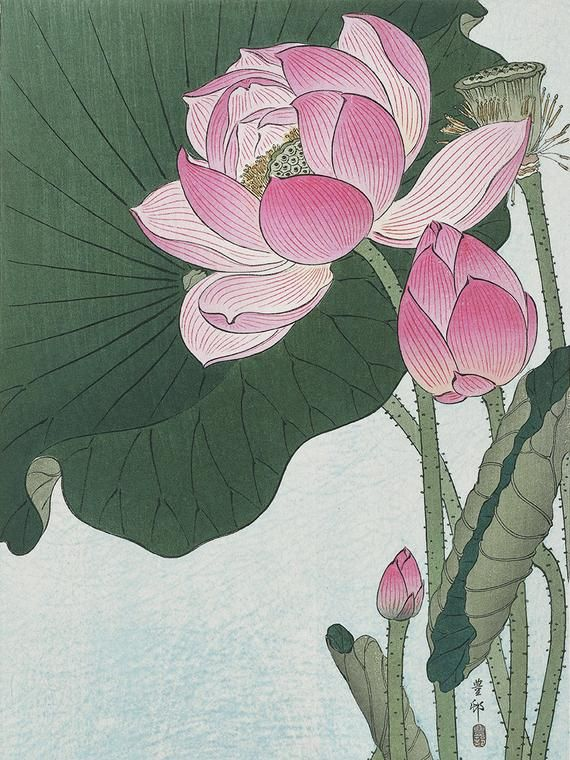Water lily flower art print poster antique prints Botanical Art Prints Home Decor Wall flower art print Japanese flowers botanical print #lotusflower