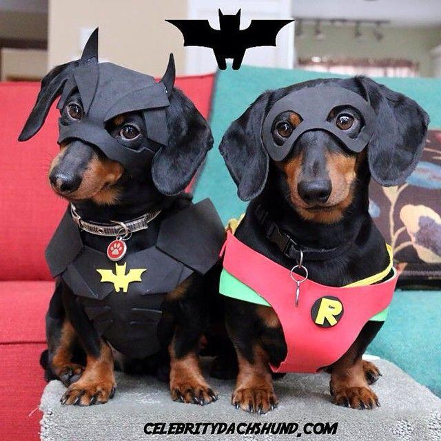 Posted On Facebook I Love Dachshunds Dachshund Dog Dachshund