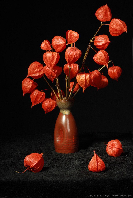 Chinese lantern flowers great fall decorating vorlagen