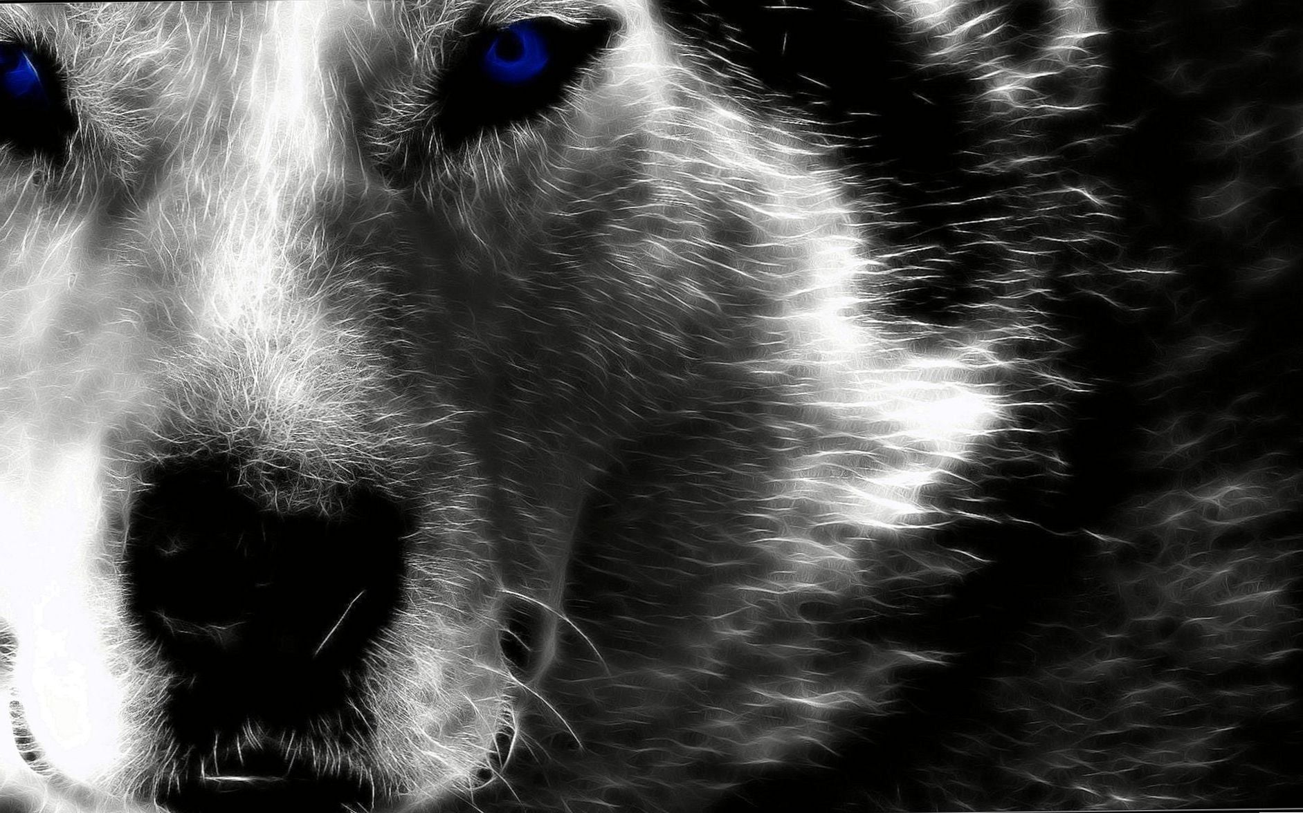 Alpha Wolf Hd Wallpapers Alpha Wolf Hd Wallpapers Wolf Wallpaper Hd Wallpaper Wolf Images