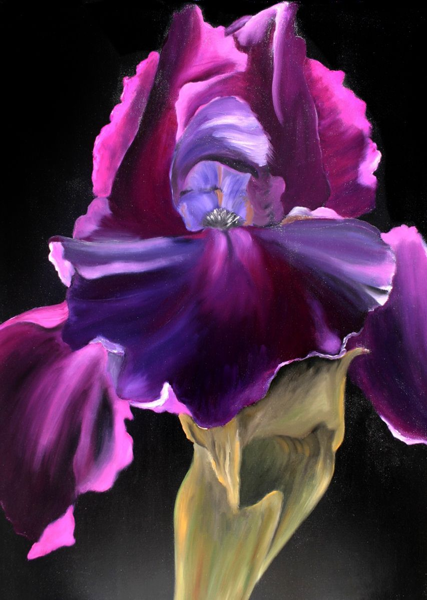 Black iris oilpainting on canvas 70x100 flowersplants pinterest black iris oilpainting on canvas 70x100 izmirmasajfo