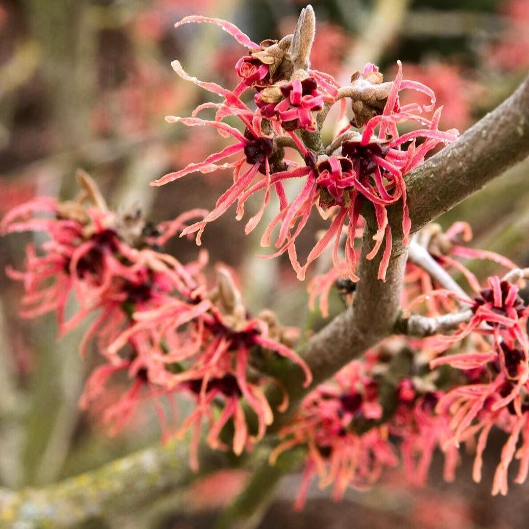 Winter Red Flower Plant