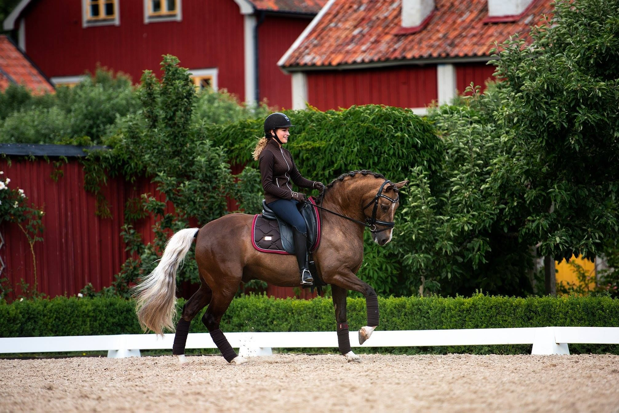 Obsessing over the new Brown & Bordeaux from Equestrian