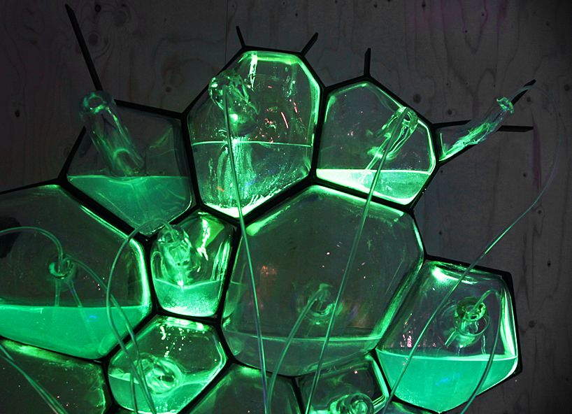 Bioluminescent Bacteria Lamp Www Pixshark Com Images