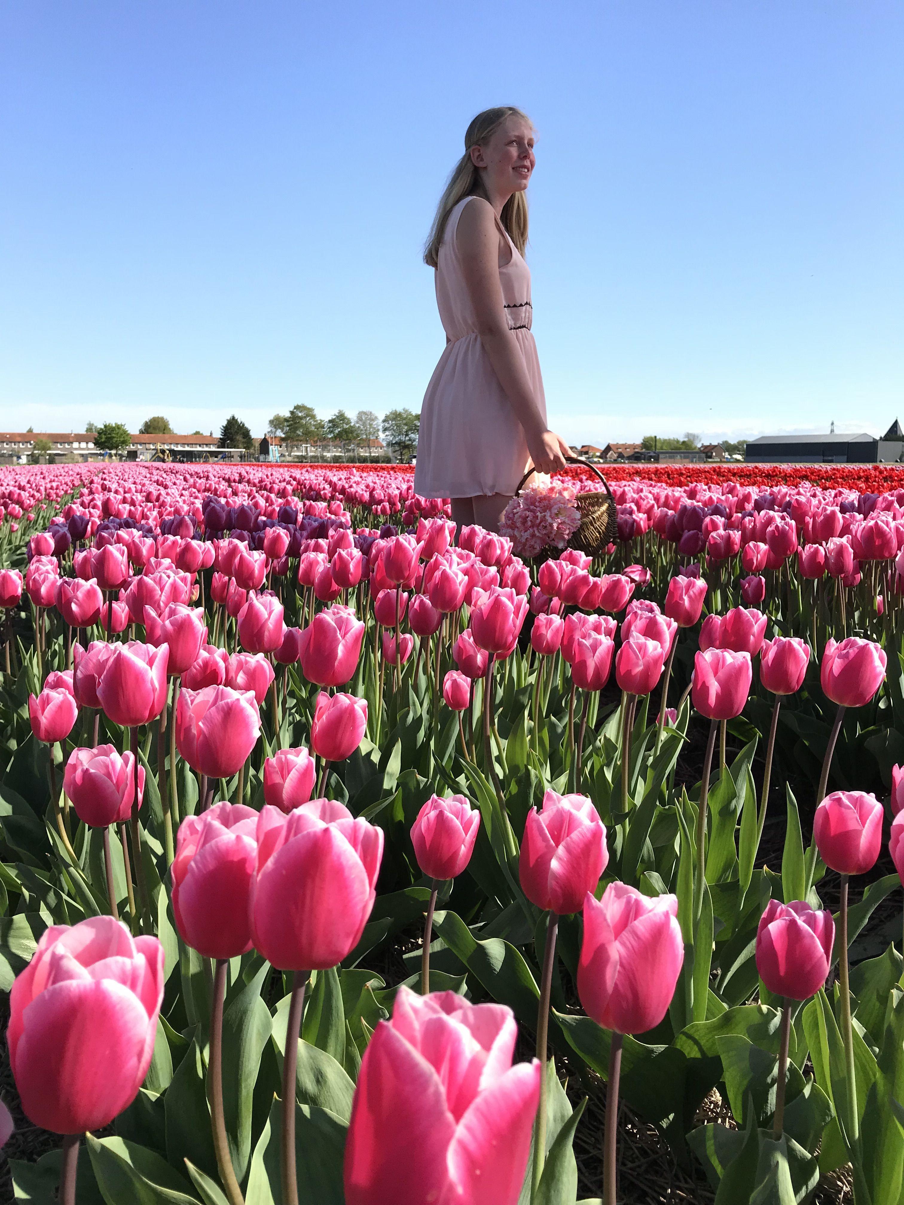Pin Op Tulip Bulbs By Fam Flower Farm