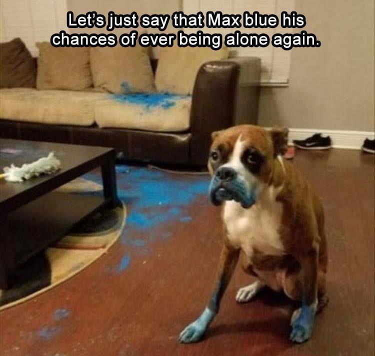 Pin De Niky En Momoz Memes Divertidos Sobre Perros Mascotas Memes Memes Perros