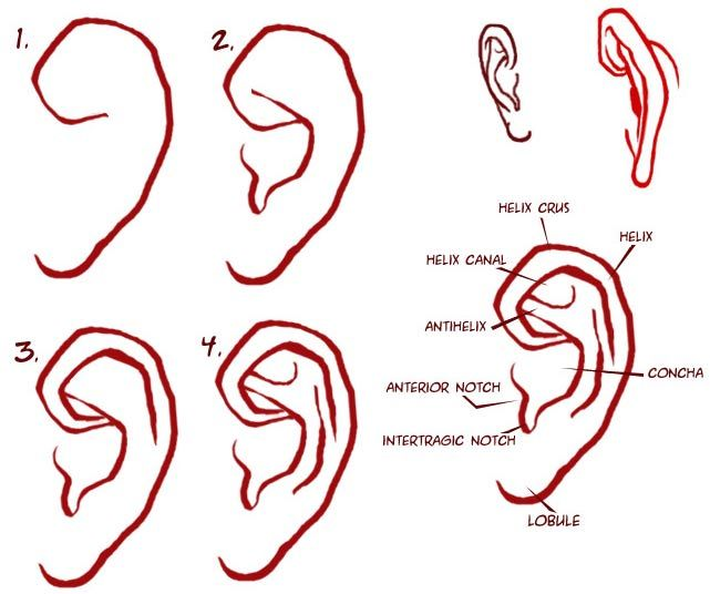 learning to draw | how to draw ears