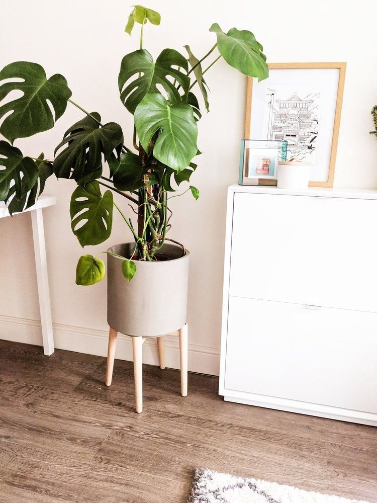 Pin On House Plants Decor #plant #stands #for #living #room