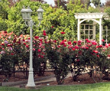Superb Rose Garden Tour   Laguna Hils/San Juan Capistrano Saturday, May Tour  Beautiful And