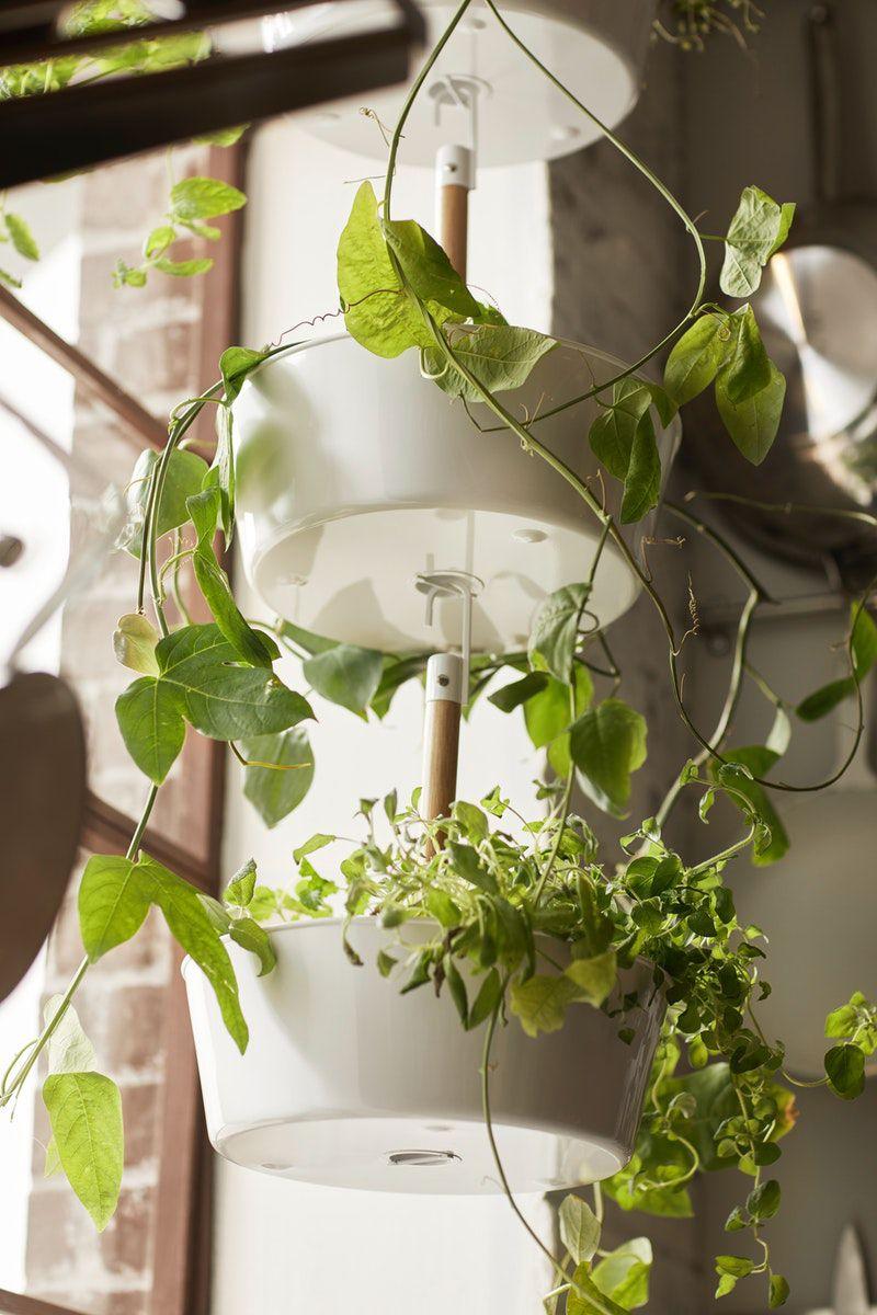 Bittergurka Ampel Weiss Ikea Deutschland Ikea Pflanzen Hangender Garten Pflanzen